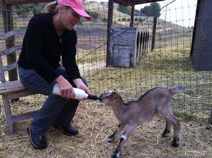 Alcea Rosea Farm – Templeton Image 5