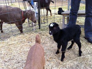 Alcea Rosea Farm – Templeton Image 4