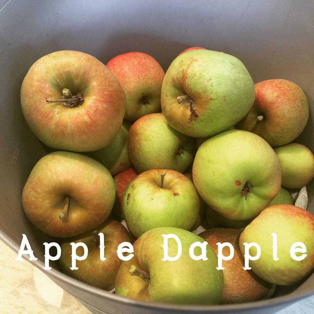Organic Apples from my tree! Cant wait to bake withhellip