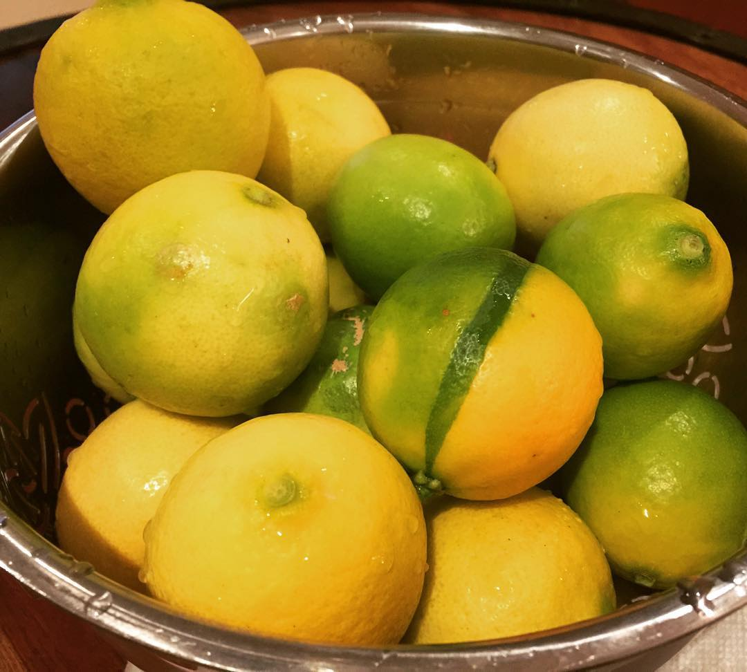 Still getting lots of Lemons amp Limes this winter inhellip