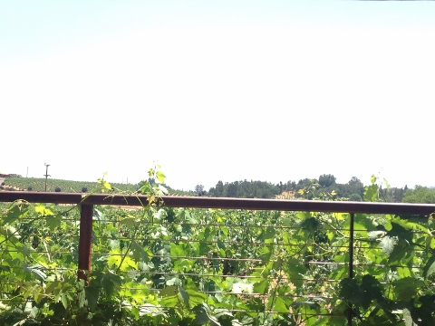 Ridge Winery 2014-06-23 001 (480x360)