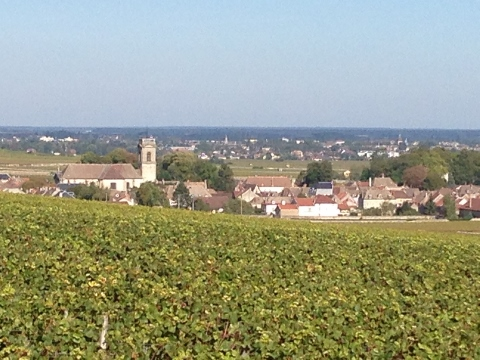 Burgundy 2014 286 (480x360)