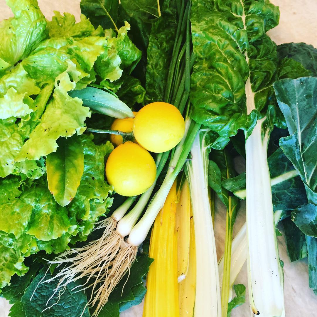 Wow  Spring Greens from my Garden! Stay tuned forhellip