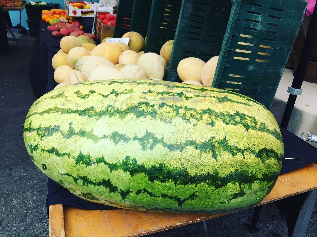 Now thats a Watermelon!! pacificpalisadesfarmersmarket