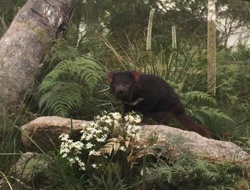 tasmania-201-650x488