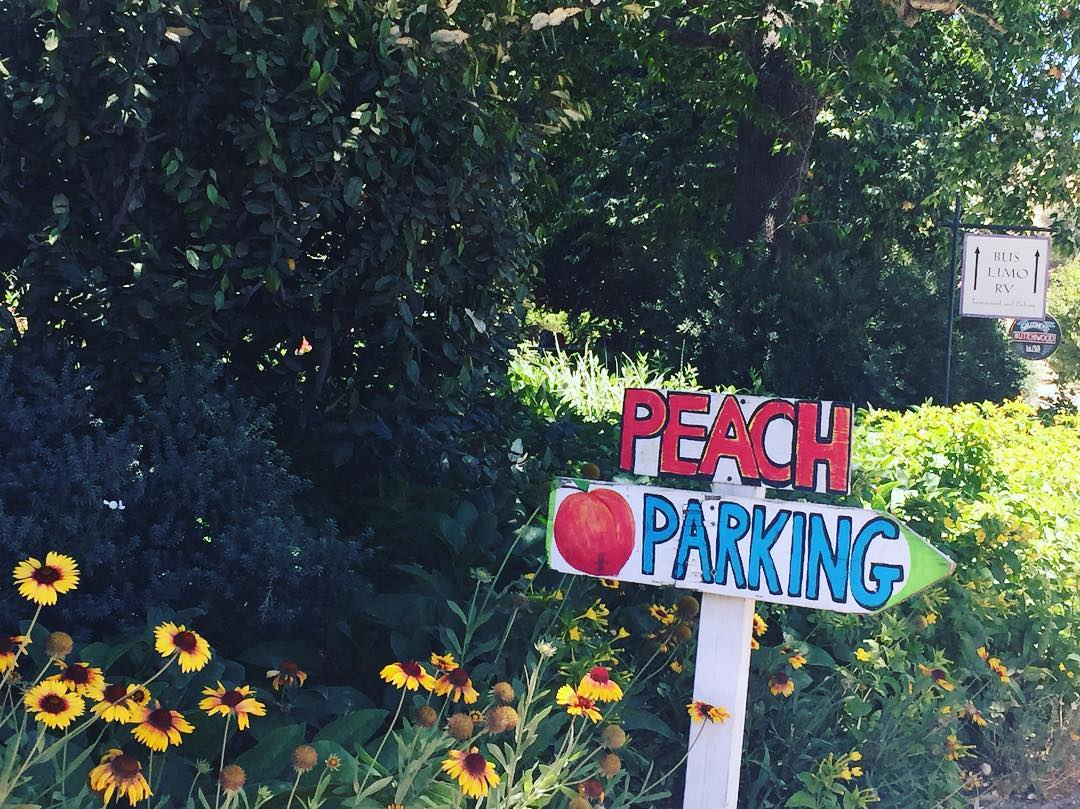Peaches should have priority parking! livelovelaughfood peaches santynezvalley eater huffposttastehellip