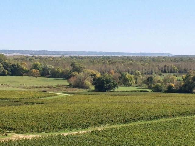 Wine, Dine & Explore Bordeaux, France! Image 32