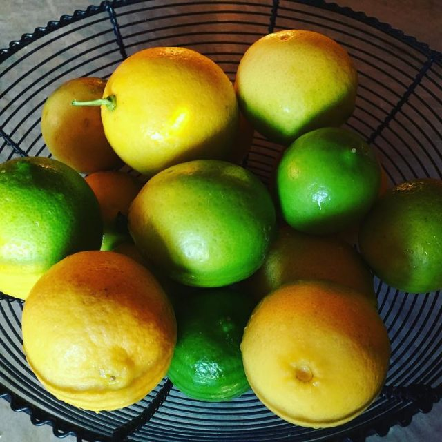 Loving Citrus Season!! livelovelaughfood citrusseason lemons limes meyerlemons