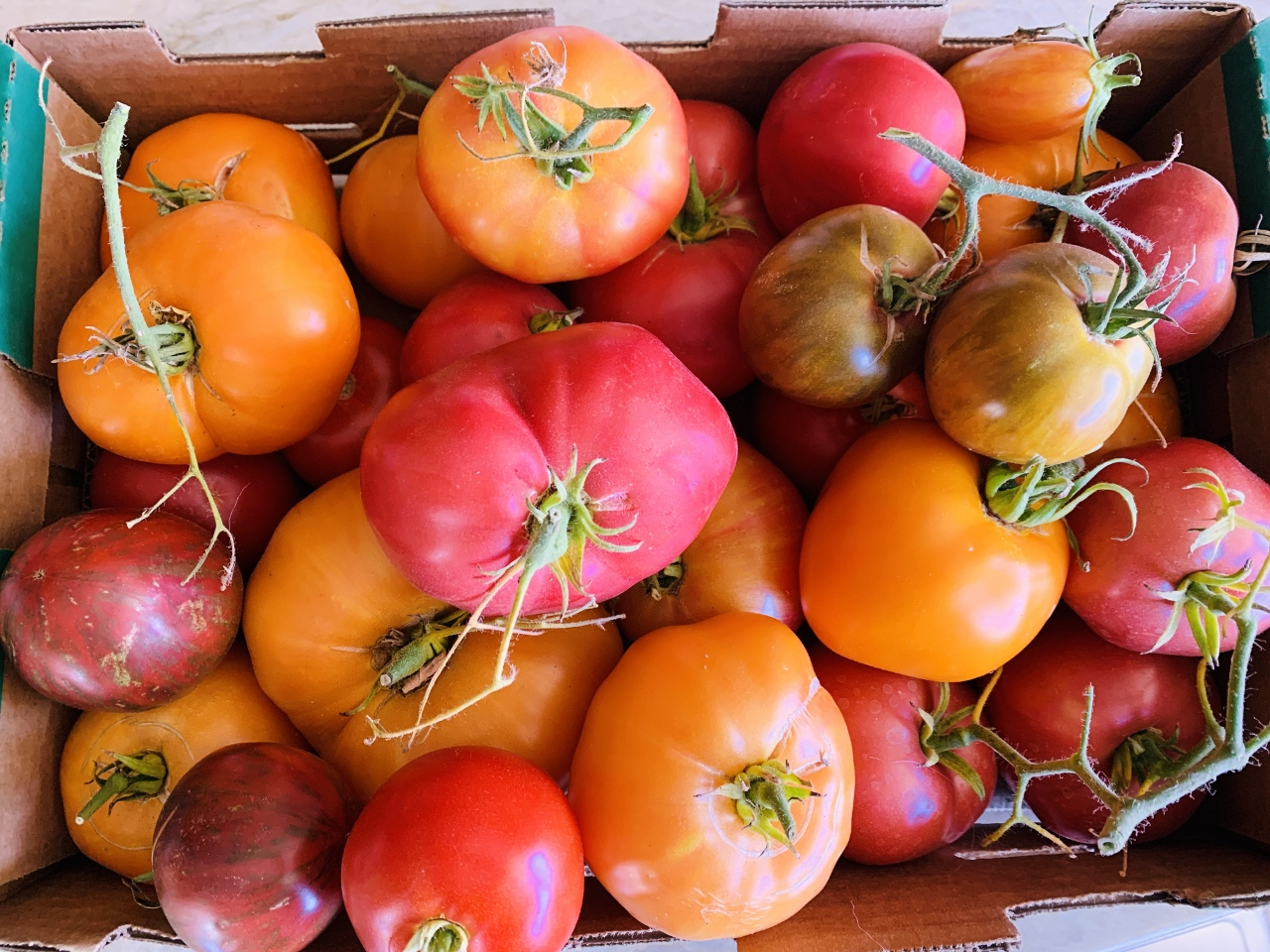 Electric Pressure Cooker Heirloom Tomato Sauce – Recipe! Image 3
